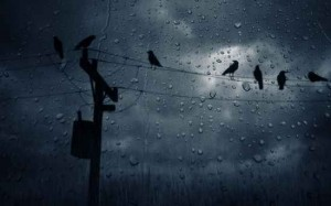 power-line-dark-creepy-crows-rain-pretty-hd-wallpaper-142945746927